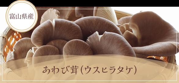 富山県産 あわび茸(ウスヒラタケ)